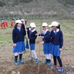2010 ilköğretim ağaç dikimi