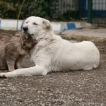 2005 yılı 3 ayaklı köpeğimiz şeker ve kedimiz kahve