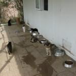 Doğçev Kedi Evi Resimleri
